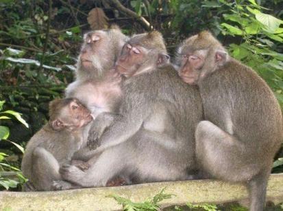 Objek Wisata Alas Kedaton - Monkey forest