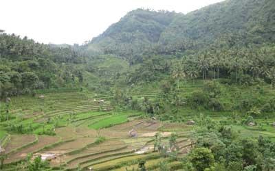 Brine Rice Terrace View: Perjalanan menuju Amed
