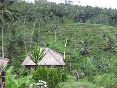 Objek Wisata Tegalalang Bali