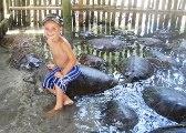 water_sport_turtleislandrz_168